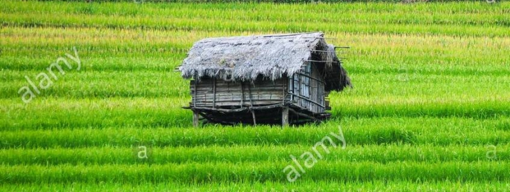 terraced-rice-field-with-small-house-in-yen-bai-province-northern-krca5b.jpg