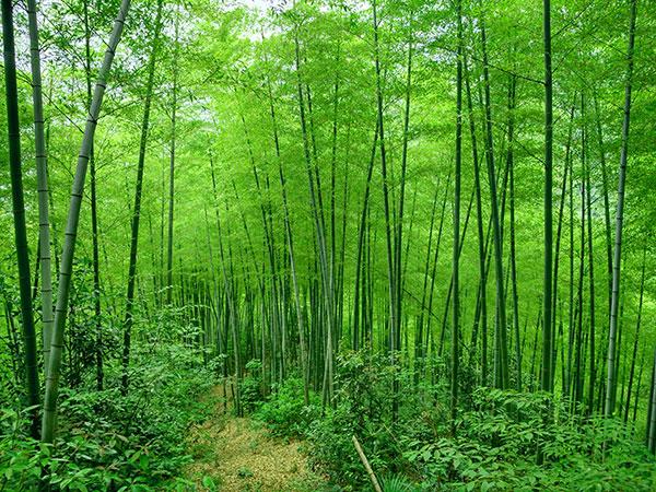 mukeng-zhuhai-bamboo-forest-03