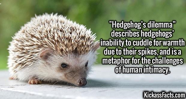 2492-Hedgehog-Dilemma